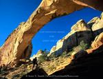Capitol Reef National Park, Utah. USA. Hiker below Hickman Bridge. Natural bridge formed in Navajo Sandstone. MR