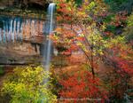 Zion National Park, Utah. USA. Waterfall, bigtooth maple (Acer grandidentatum), canyon wild grape (Vitis arizonica), & box elder (Acer negundo) in autumn below Emerald Pools. Zion Canyon.