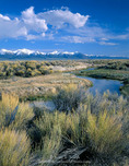 Nevada. USA. Reese River & rabbitbrush in Reese River Valley in spring. Toiyabe Range in distance. Great Basin.