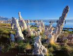 Mono Lake Reserve, California. USA. Tilting tufa columns & vegetation at seep along south shore of Mono Lake.