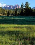 High Uintas Wilderness, Utah. USA. Wet meadow on river terrace above East Fork Smiths Fork Creek. Red Castle Peak in distance. Uinta Mountains. Uinta-Wasatch-Cache National Forest.