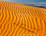 Utah. USA. Little Sahara Recreation Area. Dried stalk of sunflower casts shadow on rippled dune at sunset. Little Sahara Dunes. Great Basin.