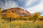 Capitol Reef National Park, Utah. USA. Rabbitbrush, orchard & sandstone cliffs below cirrus clouds in autumn. Historic Fruita District of park.