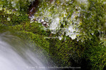 Utah. USA. Ice on moss-covered rock along spring-fed stream in winter. Spring Hollow, Logan Canyon. Uinta-Wasatch-Cache National Forest. Bear River Range. Wasatch Mountains.