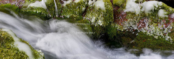 Utah. USA. Ice on moss-covered rocks along spring-fed stream in winter. Spring Hollow, Logan Canyon. Uinta-Wasatch-Cache National Forest. Bear River Range. Wasatch Mountains.