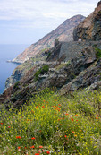 Corsica. France. Europe. Wildflowers & visitors on road cut into steep slopes above Mediterreanean Sea. Cap Corse.