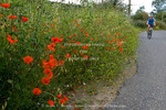 Corsica. France. Europe. Woman bicyclist & wildflowers near St. Florent.