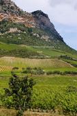 Corsica. France. Europe. Vinyards on hillside on