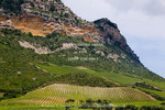 Corsica. France. Europe. Vinyards on hillside on