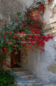 Corsica. France. Europe. Bougainvillea in bloom above entrance to house in Oletta.
