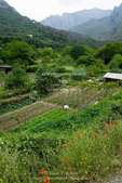 Corsica. France. Europe. Man working on small farm on outskirts of town of Corte at mouth of Gorges du Tavignano (Tavignano Gorge).