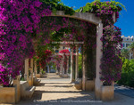 Corsica. France. Europe. Flowers in bloom on arbors above walkway at Place De Gaulle (De Gaulle Square). Ajaccio.