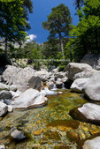 Corsica. France. Europe. Clear water & granite below forest of beech & laricio pine trees above Col de Vizzavona. Along the GR20 trail (aka, Fra li Monte).