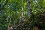 Corsica. France. Europe. Hiker in beech forest (Fagus sylvatica) along GR20 trail (aka, Fra li Monte). Near Col de Vizzavona.