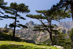 Corsica. France. Europe. Laricio pines (Pinus larico) frame pinnacles of Aiguilles del Bavella. Above Col de Bavella.