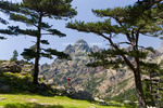 Corsica. France. Europe. Hiker below laricio pines (Pinus larico) takes in view of pinnacles of Aiguilles del Bavella. Above Col de Bavella.
