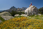 Corsica. France. Europe. Hiker takes a break on boulder above Corsican gorse (Genista corsica) in bloom. Pinnacles of Aiguilles de Bavella in distance. View from above Col de Bavella.