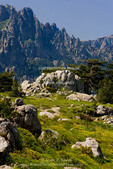Corsica. France. Europe. Granite boulders, gorse in bloom, and pinnacles of Aiguilles de Bavella. View from above Col de Bavella.