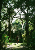 Hiking an upland trail on Cumberland Island