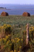 A Hay Field near the Gulf of St. Lawrence
