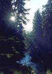 Morning at Gore Creek