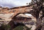 Sipapu Bridge in White Canyon