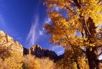 Cirrus Clouds and a Cottonwood over the Watchman, Zion Canyon
