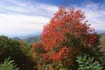 On Licking Ridge in the Plott Balsam Mountains