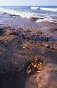 Bedrock on the Lake Superior Shore
