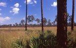 A Coastal Wet Pine Savanna