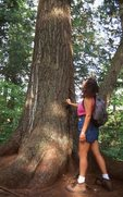 A Hiker Contemplates an Eastern Hemlock