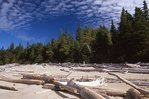 Driftwood on a Lake Superior Beach
