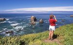 Whale-Watching on the Northern California Coast