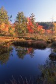 A New Hampshire Wetland