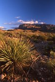 Evening in the Chihuahuan Desert