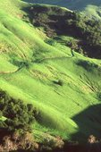 Springtime in California's Coast Range Foothills