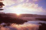Lily Pond at Sunrise