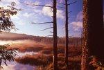A Misty Sunrise at Lily Pond
