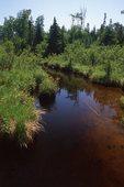 A Tannin-colored Stream near Lake Richie
