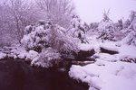 Heavy Snowfall on One of the Photographer's Gardens