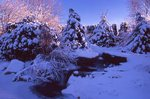 Winter Evening in One of the Photographer's Gardens