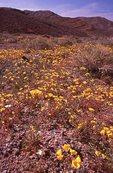 Wildflowers near Daylight Pass