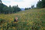 Smokey in a Colorado Wildflower Meadow
