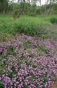Wildflowers in the Rio Grande Valley
