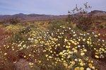 Springtime in the Mojave Desert