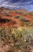 Springtime in the Sonoran Desert