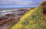 Springtime on the Northern California Coast