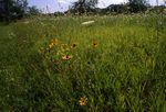An Illinois Prairie