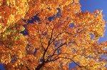 Autumn Foliage in Central Illinois