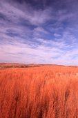A Grassland on the Southern Plains